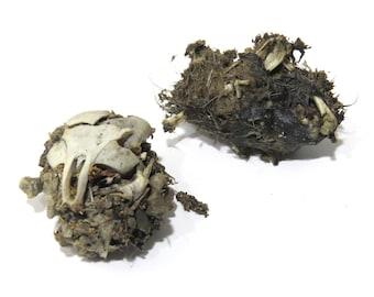 2 Owl Pellets to Dissect Partially Exposed, Rodent Fur, Skull Bits, Bones Creepy Specimen, Bird of Prey Regurgit Mouse Rat