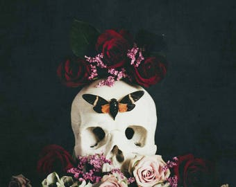 My Favorite Murder - SSDGM - Murderino Fine Art Photography - botanical, vanitas, skull, cicada, roses, dark art