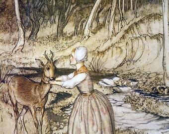 Garter on Roebuck,  Arthur Rackham, Vinatge Art Print