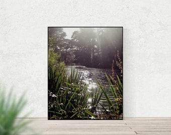 STOW LAKE | Golden Gate Park San Francisco | nature photography | sun sparkles on water | modern rustic home decor | green plants wall art