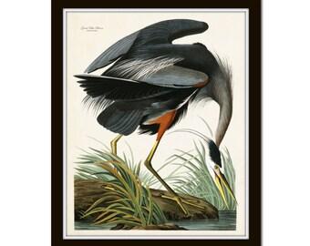 Vintage Audubon Blue Heron, Bird Print, Giclee, Art Print, Poster Nautical, Coastal Art, Sea Bird, Heron, Audubon Bird Prints, Wall Art