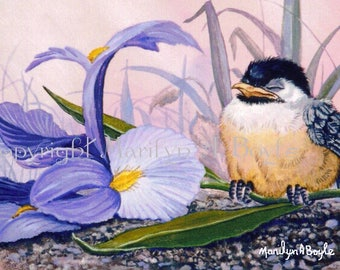 BABY CHICKADEE ACEO Card; 2.5 x 3.5 inches, Limited Edition run of only 15, flower, iris, bird, feathers, wings, garden, nature, print