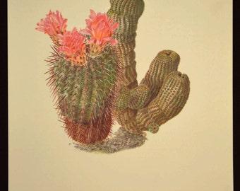 Cactus Wall Art Cacti Print Decor Nature Print Art Botanical