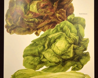 Lettuce Print Kitchen Wall Decor Art Vegetable Food