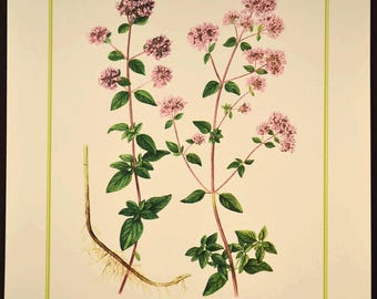 Oregano Print Flower Wall Decor Nature Botanical Art Pink