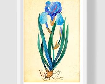 Arctic Blue Iris, Iris Watercolor Painting, Blue Iris Art Print, Watercolor Botanical Illustration, Iris Poster, Archive Quality Home Decor