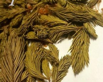 Spruce shoots. Dried. Organic herbal tea 40g