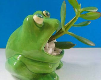 Adorable Vintage Ceramic Frog Planter With Jade Plant, Succulent, Low Care Planter, Frog Decor, Novelty Planter.