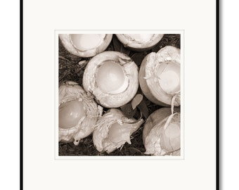 Black and white photography, sepia prints, raw coconuts, Philippines island, Cebu, coconut water, Asian tropical foods, tropical island food