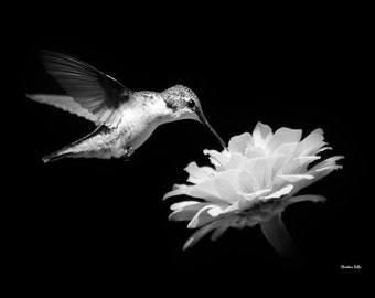 Hummingbird Gift, Black and White Photography, Hummingbird Wall Art, Black and White Prints, Nature Pictures, Humming bird Nature Print
