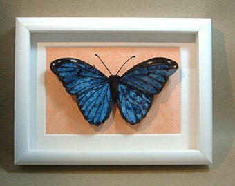 "Velvet ""Morpho menelaus"" (Blue morpho) butterfly, framed in shadowbox"