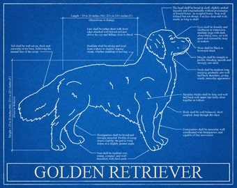 Golden Retriever Blueprint Elevation / Golden Retriever Art / Golden Retriever Wall Art / Golden Retriever Gift / Golden Retriever Print