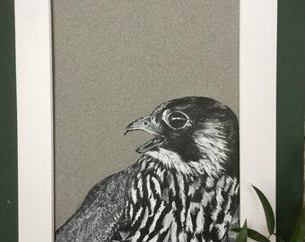 Peregrine Falcon Original Ink Portrait
