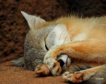 Wildlife Photography, Fox Print, Red Fox, Fine Art Photography, Wall Decor, Home Decor, FREE SHIPPING, Fox Decor, Animal Decor Nursery Decor