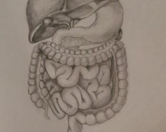 Gastrointestinal System Drawing
