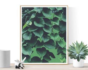Botanical print, Green Ivy Leaf Print, Ivy Decor Plant, Botanical, Tropical Wall Art Decor, Printable Art, Sage Green, Plant Photography