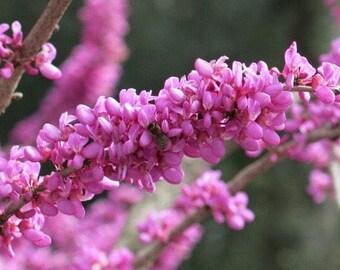 Pink flower fantasy