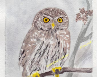 Little Owl-Animal watercolor painting