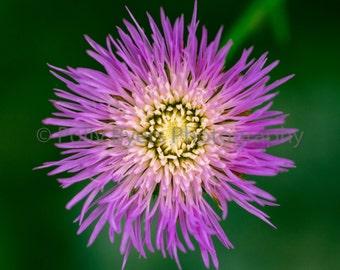 Floral Starburst Nature Art Photography