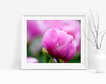Printable Art, Pink Flower Photo, Peony Photograph, Floral Photography, Bedroom Decor, Instant Download