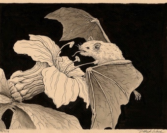 Leaf-Nosed Bat--Print