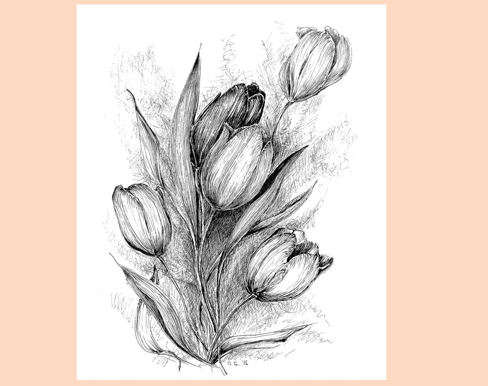Tulip Flower Drawing Floral Original Art Black White Tulip