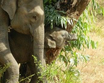 Elephant calendar: Trunk 'n Tails 2017 wall calendar of Sri Lanka elephants