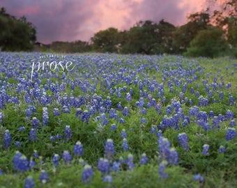 Bluebonnet Field - Digital Backdrop