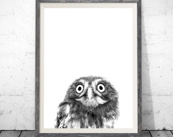 owl print, nursery printable, owl decor, owl wall art, owl photo, nursery decor, woodland nursery, owl, woodland animals, owl art
