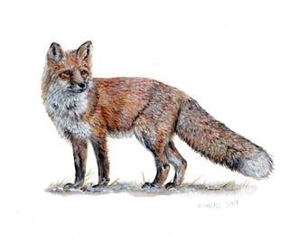 Original Red Fox Painting