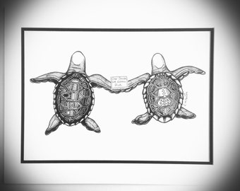 Limited Edition Turtle Pair Print of Ink Drawing