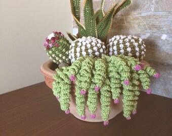 Flower pot with succulent plants