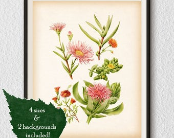 Vintage succulent print, Succulent illustration, Vintage botanical print, Printable art, Succulent wall art print, Instant download art, #72
