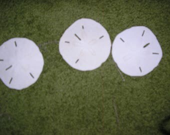 SAND DOLLARS 40 of them Made in the Philippines