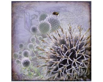 Globe Thistle Canvas