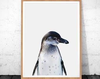 Animal Print Art, Penguin Art, Penguin Printable Art, Animal Digital Poster, Animal Art Decor, Penguin Wall Art, Animal Color Photography