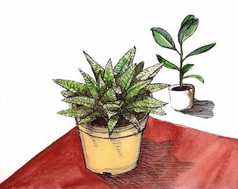 Aquarelle originale Haworthia spider - Plante succulente et caoutchouc