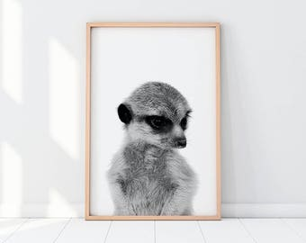 Suricate Art, Meerkat Print, Baby Suricate, Meerkat Art Print, Black And White Meerkat, Animal Print, Animal Photography, Meerkat Printable