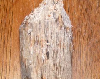 Canadian Beaver Chewed Wood