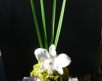 stabilized Orchid bouquet