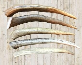 Organic Deer Antler Dog Chews | Large Antler | Natural Dog Bone | FREE SHIPPING