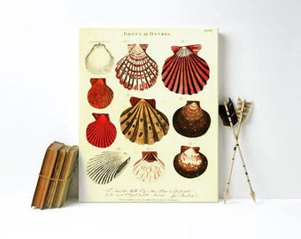 Seashell specimens canvas print, coastal decor, beach decor, 11x14 gallery wrap canvas print