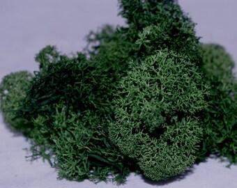 Lichen/Finland/Reindeer Moss - Dark Green