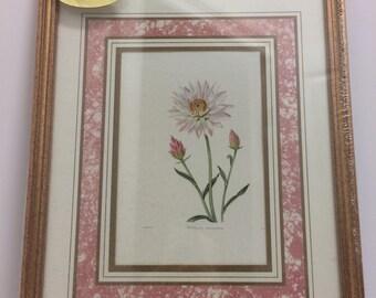 Set of 3 Vintage Botanical or Floral Prints w/ Pink and Gold Matting in Gold Frames - New in Original Packaging