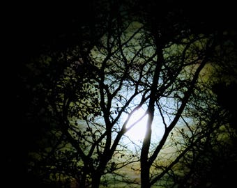 Moonlight through the trees, Moon, High Resolution, Digital Download