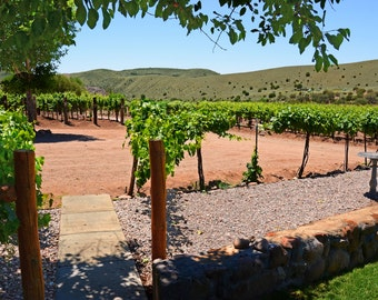 Esperanza Winery on the Mimbres New Mexico Wine Grapes Kitchen Art Wine Tasting Vineyards New Mexico