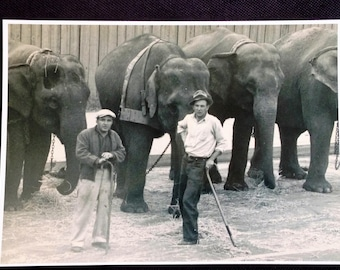 Elephants and Bullhands - Cole Brothers Circus 1937 - 5 x 7 plus details - See Description
