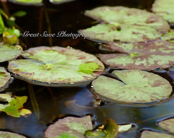 Lily Pads, Photography, Home Decor