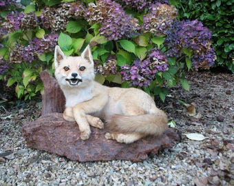 A Very Nice Old French Taxidermy Young Fox Cub Mounted On A Wooden Base