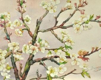 Floral Fine Art Watercolor Painting  Flowering apricots - Original Watercolour Home Decor